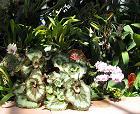 Tropenhauses Frutigen